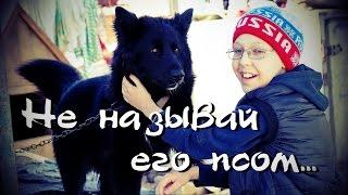"""Приют Академгородка """"Право животных на жизнь"""""""
