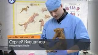 Красногвардейская ветеринарная клиника(, 2012-02-24T08:03:58.000Z)