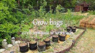 Grow Bags - uprawa w workach