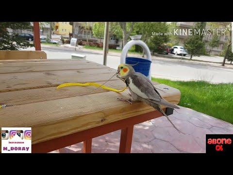 Sultan papağanı ile parka gidiyoruz:)