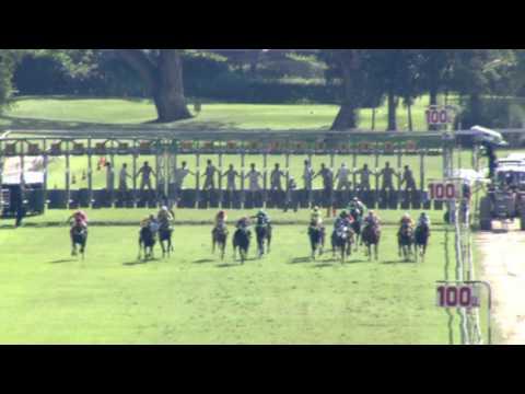 ม้าแข่งสนามฝรั่ง วันอาทิตย์ที่ 4 ธันวาคม 2559 เที่ยว 4 ม้าชั้น 1
