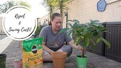 Repotting and Re-Organizing Mom's Cactus Collection | Queen Creek, AZ