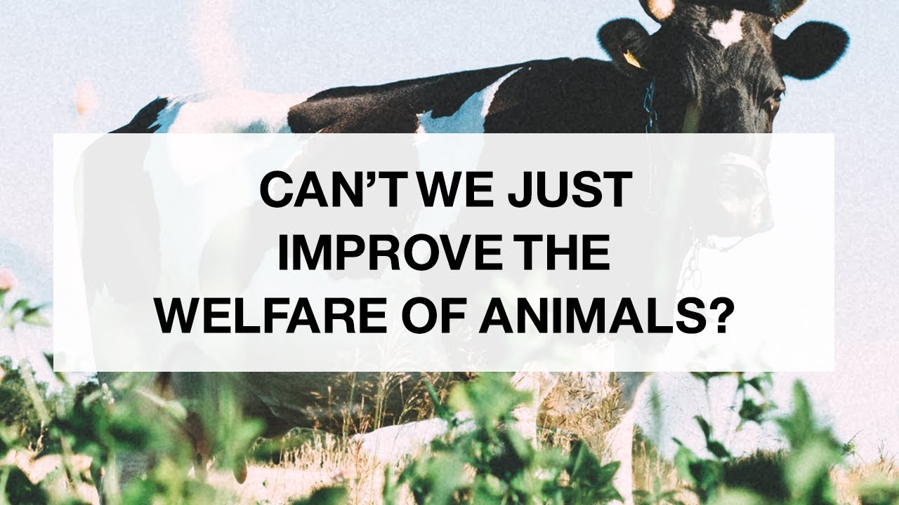 Can't We Just Improve the Welfare of Animals?