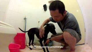 DẠY CHÓ CƠ BẢN: Bài 7: Hướng Dẫn Tắm Chó tránh Ve chó