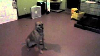 Dog Training Jan Brady From Memphis Tn: Sit-stay, Jan Brady