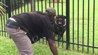 Django Rottweiler Protecting Backyard thumbnail