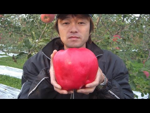 12 Most EXPENSIVE Fruits In The World!