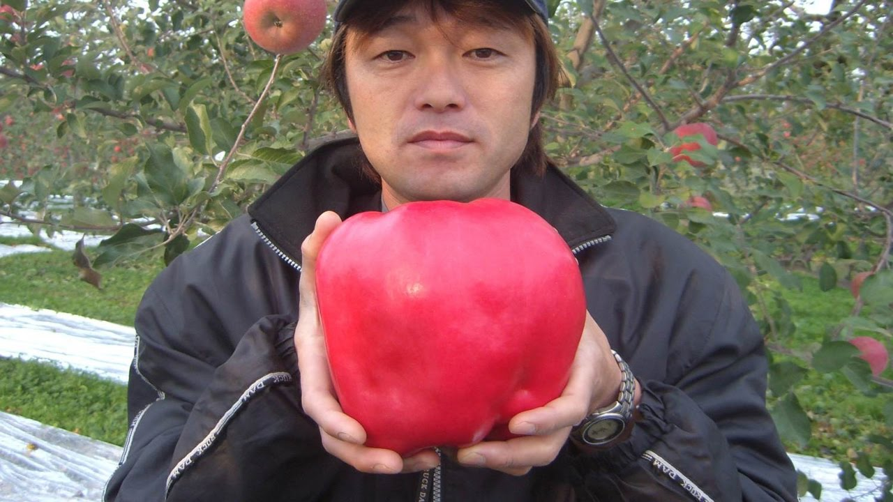 12 most expensive fruits in the world doovi - Five of the most expensive fruits in the world ...