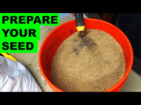 Preparing Grass Seed For Quick Germination
