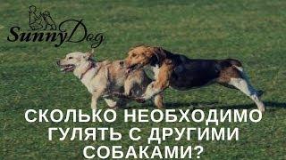 Сколько необходимо гулять с другими собаками?