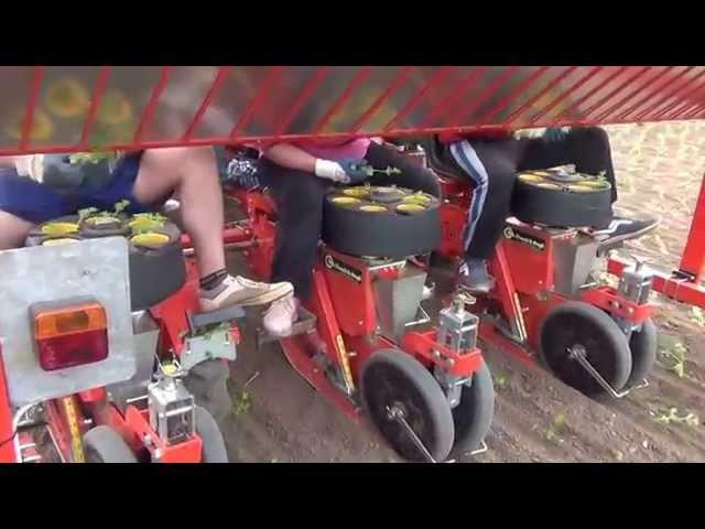 BABY TRIUM TRANSPLANTER 6 ROWS DOUBLE FRAME