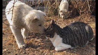 고양이와 사랑에 빠진 댕댕이 (역대급 심쿵사주의) part1