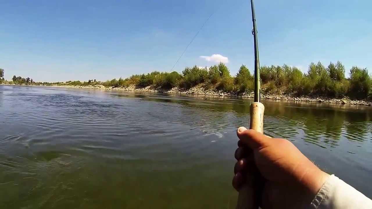 Fly fishing for aspius sava river croatia youtube for Fishing in croatia