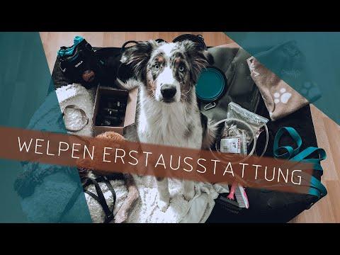 Welpen Erstausstattung | Australian Shepherd