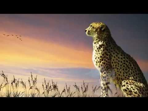 Download MURJANI LATEST HAUSA FILM TRAILER 2017 STARRING FATI WASHA
