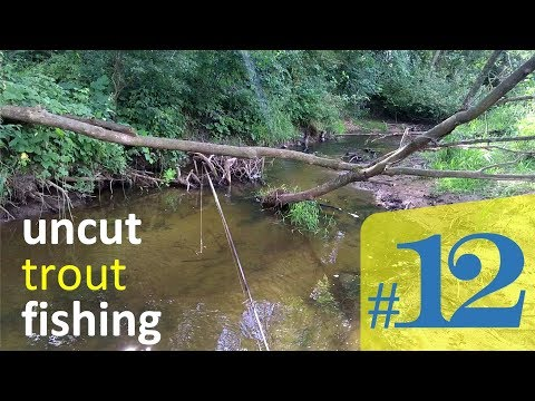Low Water Small Stream Trout. Uncut Fishing #12