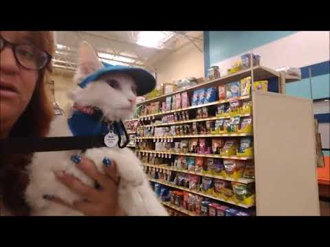 No Dogs on the Couch - Pet Smart -August 2018
