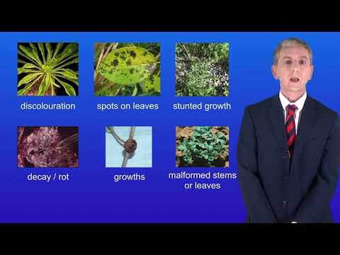 GCSE Science Biology (9-1 Triple) Plant diseases 2