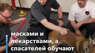 Скорая помощь – собакам