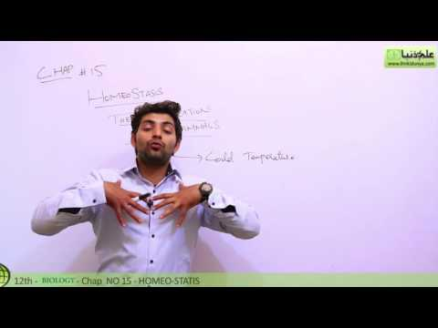 Thermoregulation in Mammals Biology - Biology Chapter 15 Homeostasis - FSC Part 2 Pre Medical