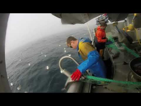 Gillnet / Net Fishing Greenland Halibut / Turbot Norway 2017