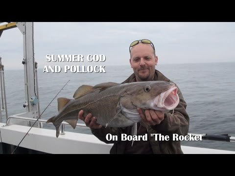Summer Cod And Pollock Fishing On Board The Rocket Poole Dorset
