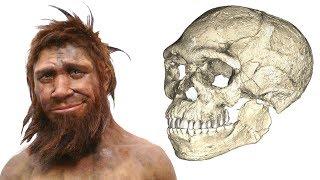 Эволюция человека. Новое открытие в мире антропологии ( новости науки, интересные факты, эволюция)