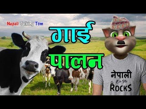Nepali Talking Tom - GAI PALAN (गाई पालन) Nepali Comedy Video 2019 - Talking Tom Nepali