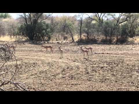 Botswana - Gaborone, Mokolodi Nature Reserve (HD)