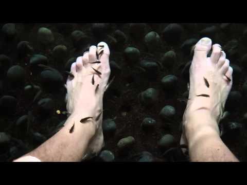 Fish eat dead skin off spa goers feet funnycat tv for Fish eat dead skin spa
