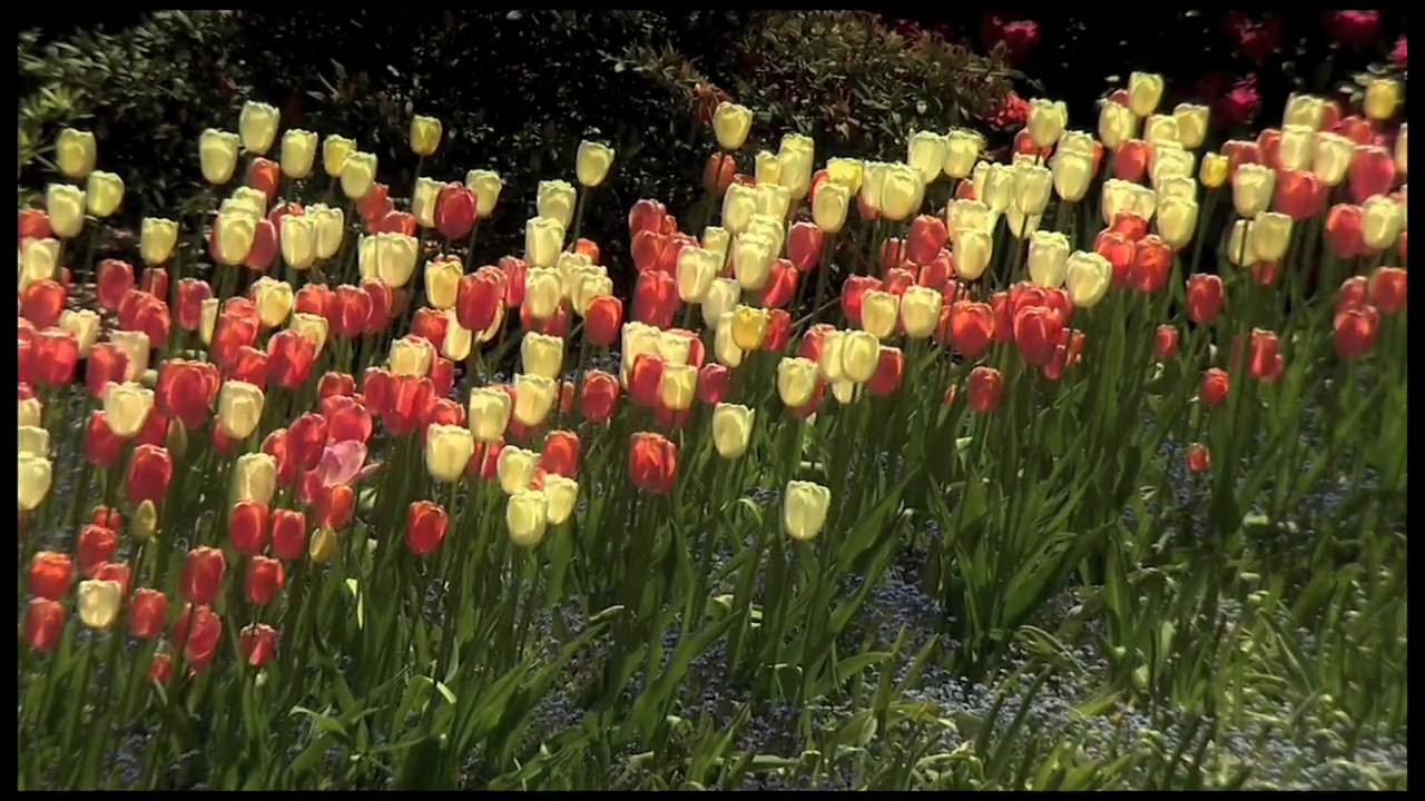 Spring at The Butchart Gardens - YouTube
