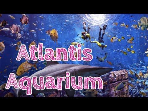 Dubai Atlantis The Palm, The Lost Chambers Aquarium,