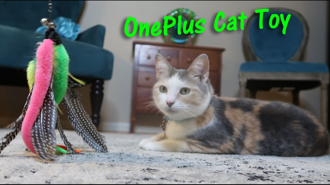 Oneplus interactive cat toy retractable cat wand toy for Retractable cat toy