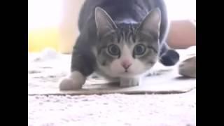 Кот какой крутит попой