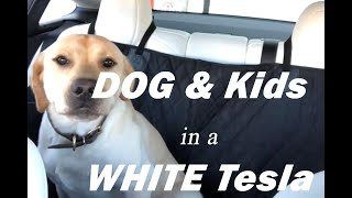 TESLA WHITE SEATS VS DOG & KIDS!