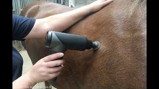 Pferdephysiotherapie - Faszienverklebungen und Muskelverspannungen lösen - Aus der Humanchiropraxis