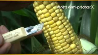 Normandie : planifier la date de récolte du maïs fourrage dès aujourd'hui  - ARVALIS-infos.fr