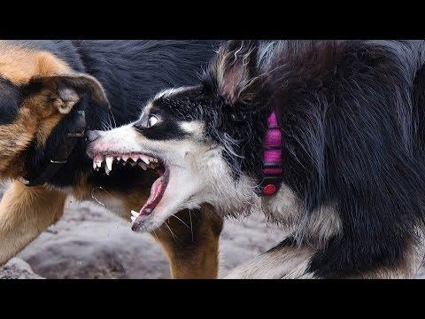 Las mascotas mas peligrosas del mundo
