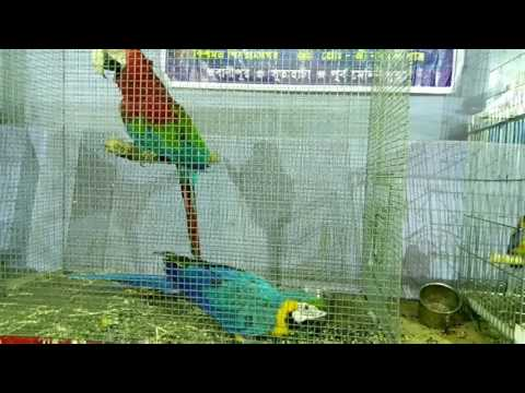 See what Macaw Bird is beautiful