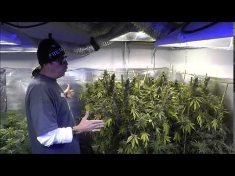 The Weed Nerd Episode 218