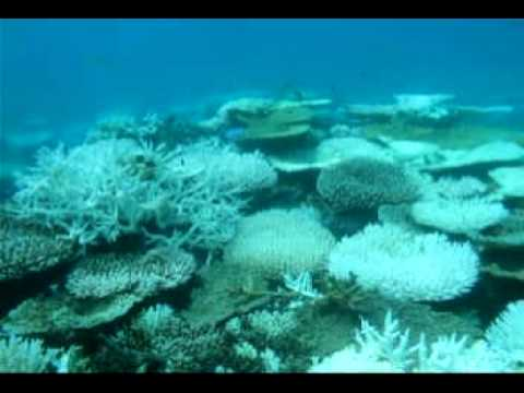 Coral Reef Bleaching Condition in Iboih - Aceh, Indonesia, was observed on May 2010