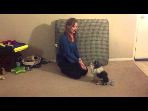 How to teach a dog to Shake for hard to teach dogs