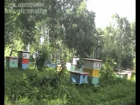 Ловушка пчелиного роя 9