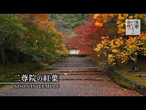 二尊院の紅葉 / Nison-in Temple / 京都いいとこ動画