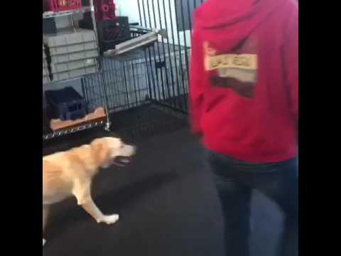 Client dogs rock!
