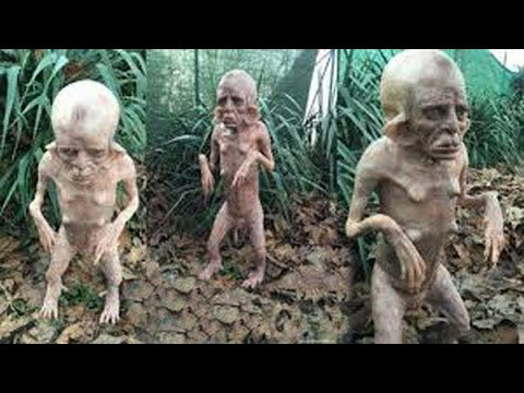 Download 15 Strangest Creatures Recently Discovered
