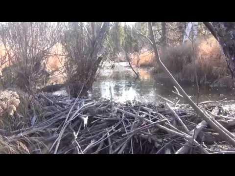 ЗИЛ 157 поездка  на пасеку по бездорожью в тайге