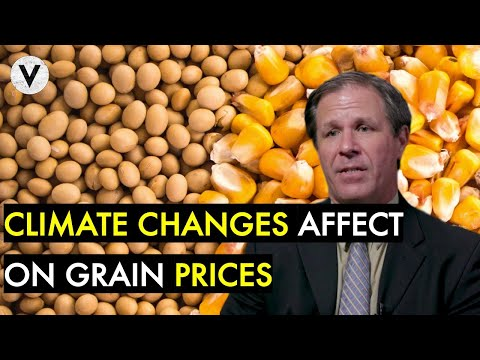 🔴-how-climate-change-affects-corn-&-soybean-prices-(w/-shawn-hackett)
