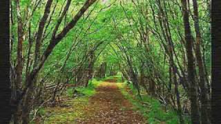 Koto - Wonderful Land