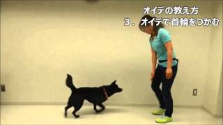 遠藤 エマ JAHA認定家庭犬インストラクター 横浜 旭区 子犬 パピー教室 ...